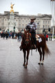 All The Queen's Horses, London, New Year's Day Parade 2015