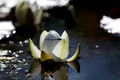 Lotus of the heart: Aum tat sat private