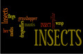 Insects / Invertebrates