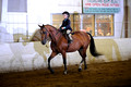 20 - Walk Trot Hunter Pleasure