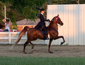 58. 3-Gaited ASB PL Horse Championship