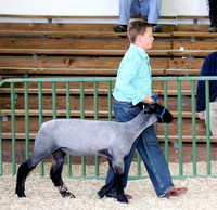 4H Lamb Show Gallery